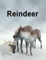 LynesCreations-Reindeer.png