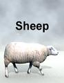 Mostdigitalcreations-Sheep.png