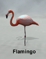 MostDigitalCreations-Flamingo.png