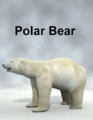 Mostdigitalcreations-PolarBear.png