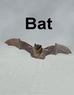 Mostdigitalcreations-bat.png