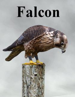 Mostdigitalcreations-Falcon.png