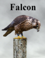 Mostdigitalcreations-Falcon.png
