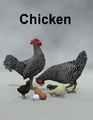 LyneCreations-Chicken.png