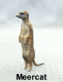 MostdigitalCreations-Meercat.png