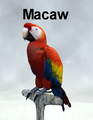 Mostdigitalcreations-Macaw.png