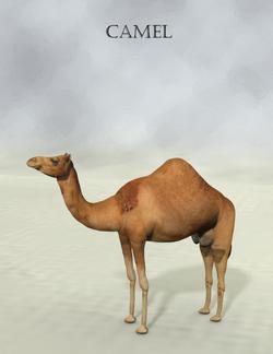 Mostdigitalcreations-Camel.png