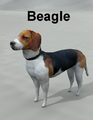 Mostdigitalcreations-beagle.png