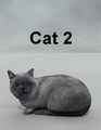 Mostdigitalcreations-Cat2.png