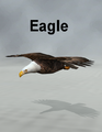 MostdigitalCreations-Eagle.png