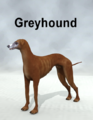 Wolmo-Greyhound.png