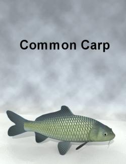 Toru Miyazawa-Common Carp.png