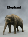 MostDigitalCreations-Elephant.png