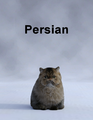 MostDigitalCreations-Persian.png