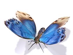 ButterflyAgeofarmour.png