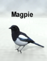 MostdigitalCreations-Magpie.png