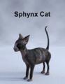 MostDigitalCreations-SphynxCat.png