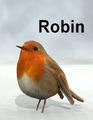 Mostdigitalcreations-Robin.png