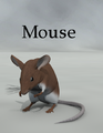 Jtrout-Mouse.png