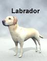 MostdigitalCreations-Labrador.png