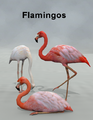 LynesCreations-Flamingos.png