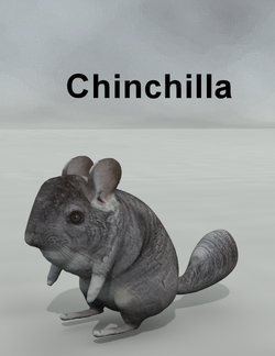 Mostdigitalcreations-Chinchilla.png