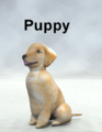 Mostdigitalcreations-Puppy.png