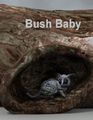 Mostdigitalcreations-BushBaby.png