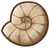 SOS Pioneers Items Treasure Ancient Shell Fossil.png