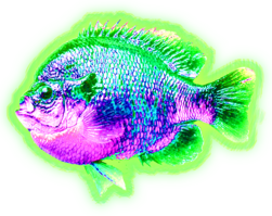 Nuclear Bream.png
