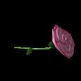 Begonia.png