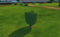 Bonsai Shrub.png