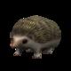 Pygmie Hedgehog.png