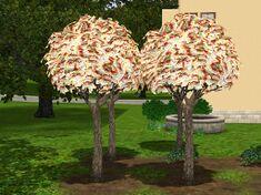 Money-tree-ts3.jpg