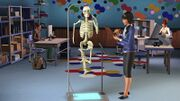 Sim skeleton.jpg