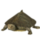 Barbour's Map Turtle.png