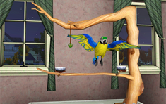 Minor Pets Blue Gold Macaw.png