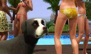 The sims 3 Dog 1.JPG