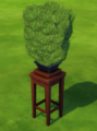 Bonsai Tree.png
