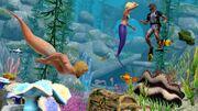 Island Paradise Mermaids.jpg