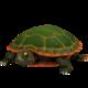 Western Painted Turtle.png