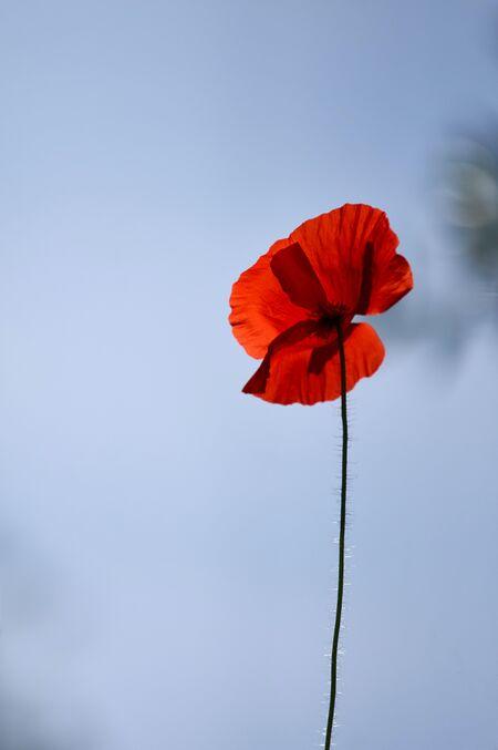 Poppy 14.jpg