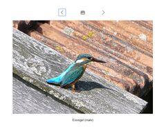 Best Pictures of Birds.jpg