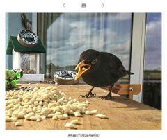 Vögel von A-Z.jpg