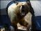 Urso.png