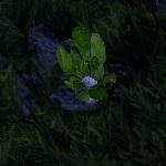 Wild root-cropnew.jpg