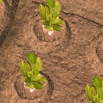 Crop plantfarmgrow.jpg