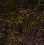 Barleygrow.jpg