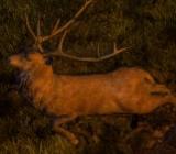 DeerStag